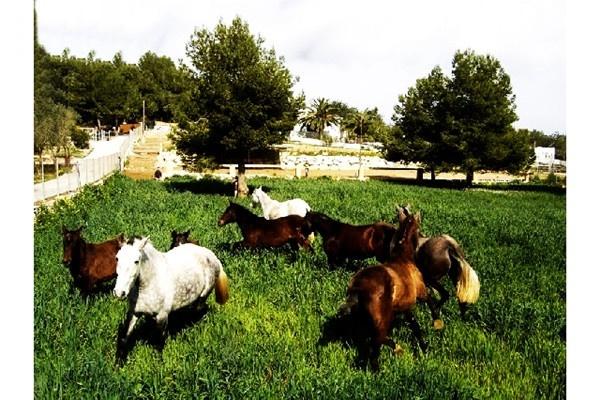 Die große Pferdekoppel, mit einigen der wunderschönen, topgepflegten Pferde